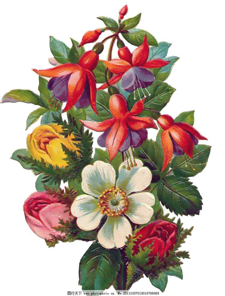 玫瑰花模板下载 手绘玫瑰花 手绘花朵 玫瑰花 静物花卉 月季花 绘画