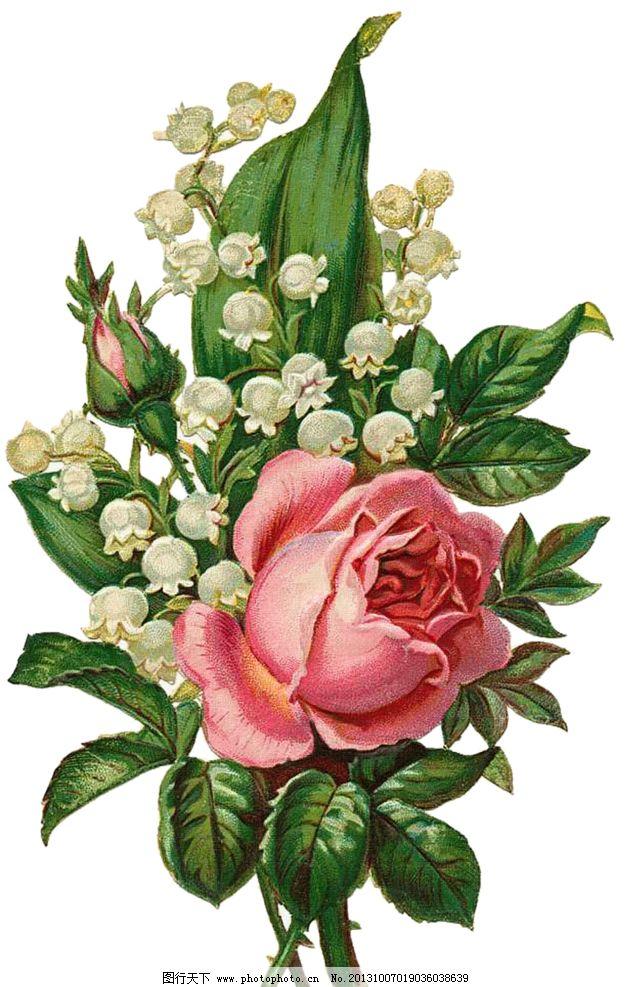 手绘玫瑰花 满天星 手绘花朵 复古花朵 玫瑰花 静物花卉 月季花 绘画