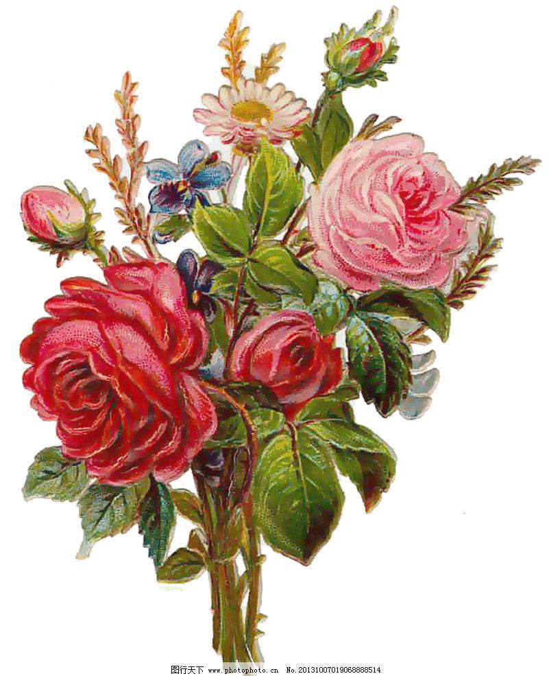 手绘玫瑰花 手绘花朵 复古花朵 玫瑰花 蝴蝶兰 静物花卉 月季花 绘画