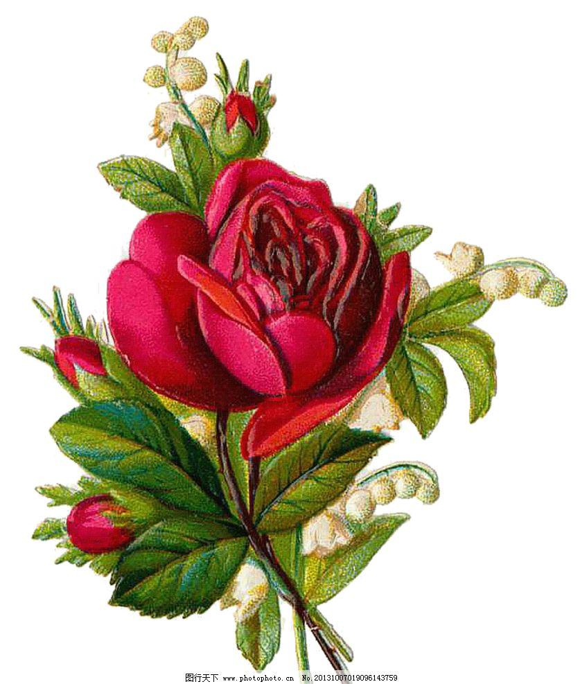 玫瑰花模板下载 手绘玫瑰花 手绘花朵 复古花朵 玫瑰花 静物花卉 月季