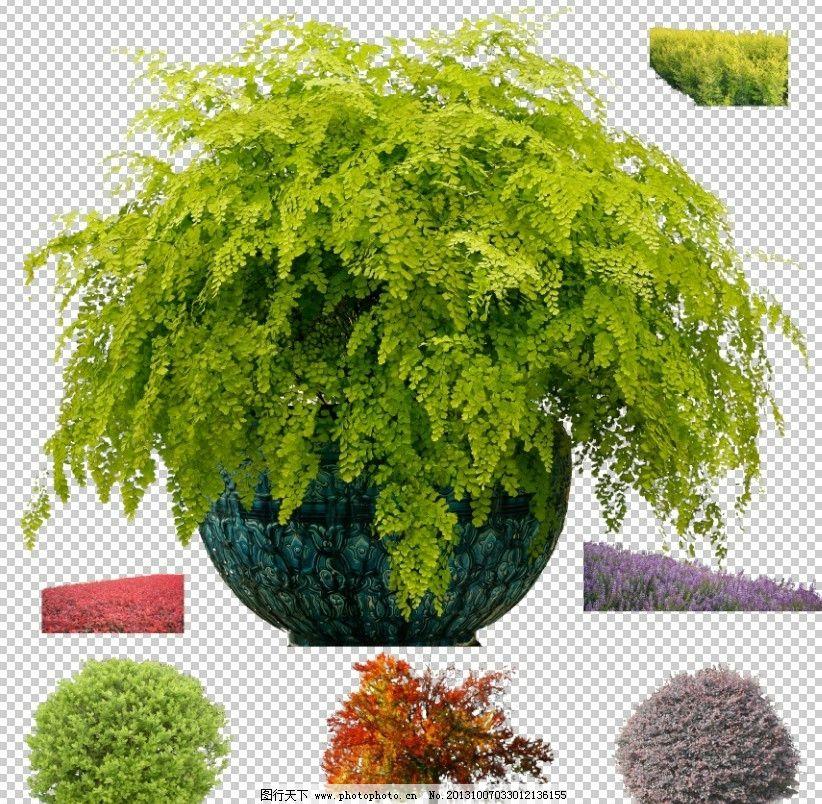 灌木 植物图片