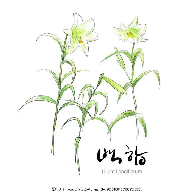 小白花免费下载 百合花 手绘花朵 白话 百合花 手绘花朵 psd源文件 其