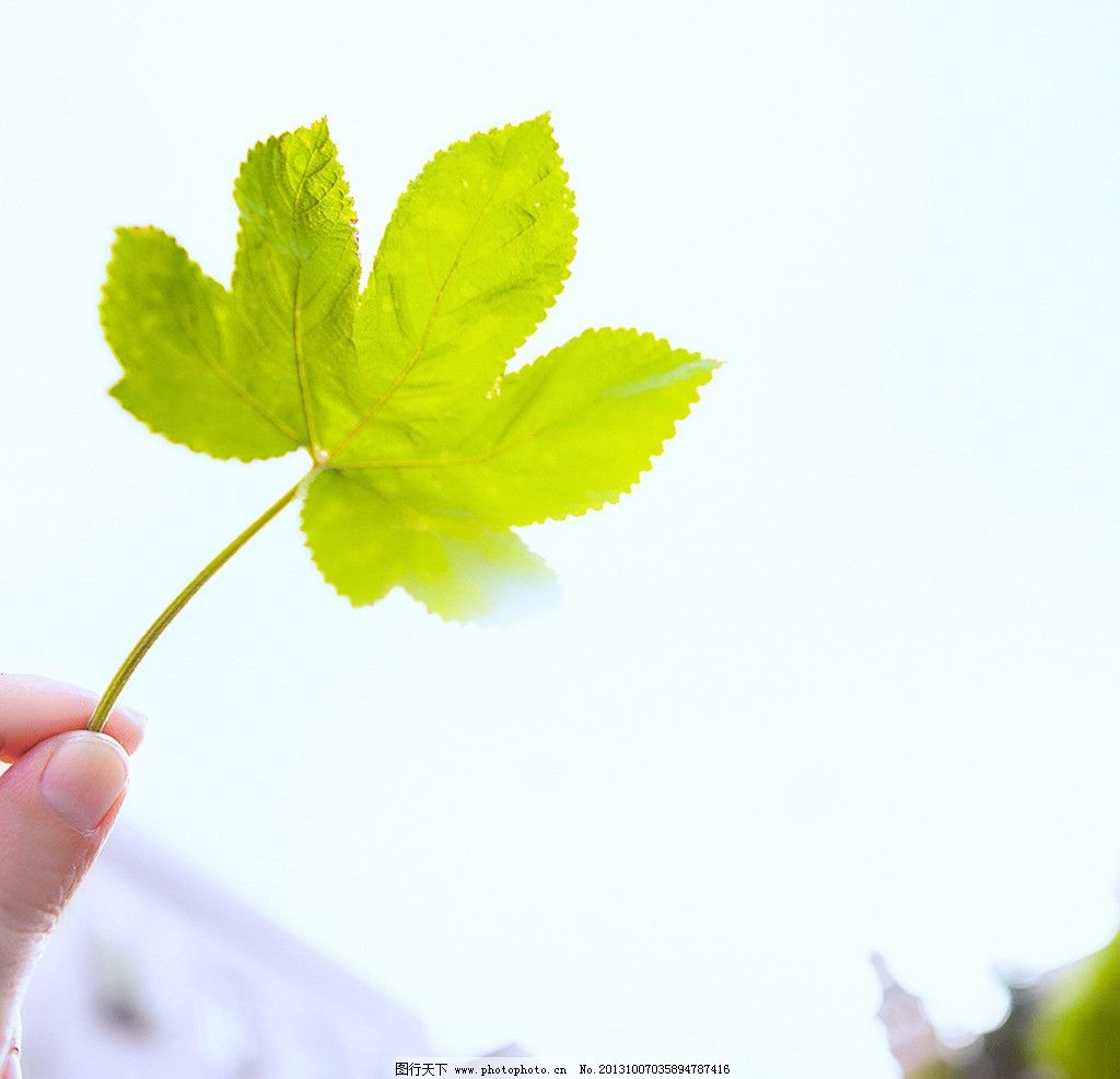 小清新绿叶图片