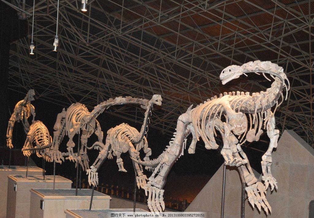 恐龙化石复原骨架图片