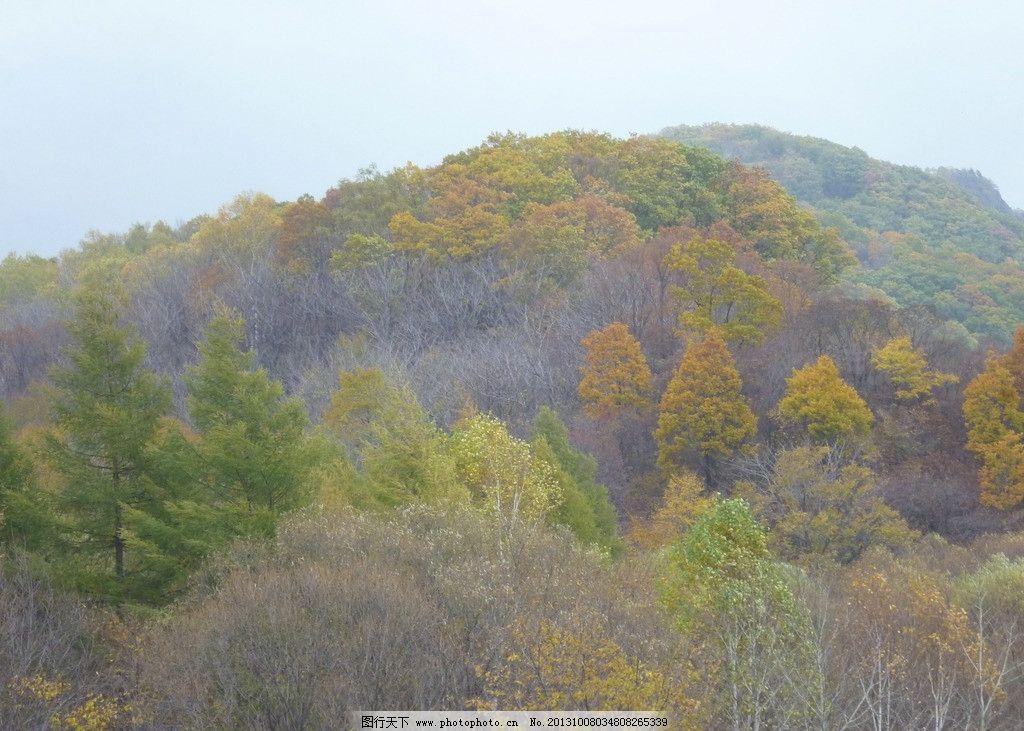 森林 秋季 秋天 树木 天空 自然风景 自然景观 摄影 180dpi jpg