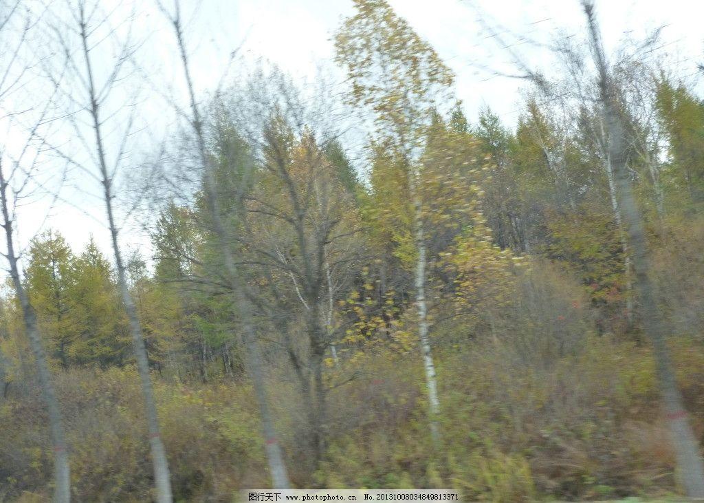 森林 秋季 秋天 树木 蓝天 白云 自然风景 自然景观 摄影 180dpi jpg