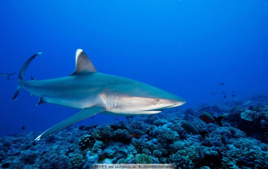 壁纸 动物 海底 海底世界 海洋馆 水族馆 鱼 鱼类 桌面 1024_646