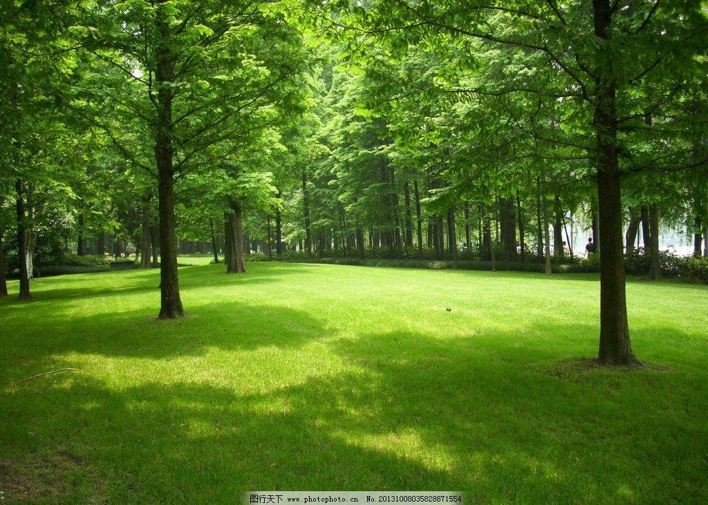 森林 水杉 杉树 树林 树叶 落叶 绿叶 秋天 草地 草坪 春天 夏天 背景图片