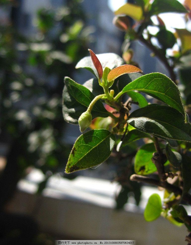 嫩芽 秋拍 盆景 秋芽 黑塔子 花卉摄影 树木树叶 生物世界 摄影 180