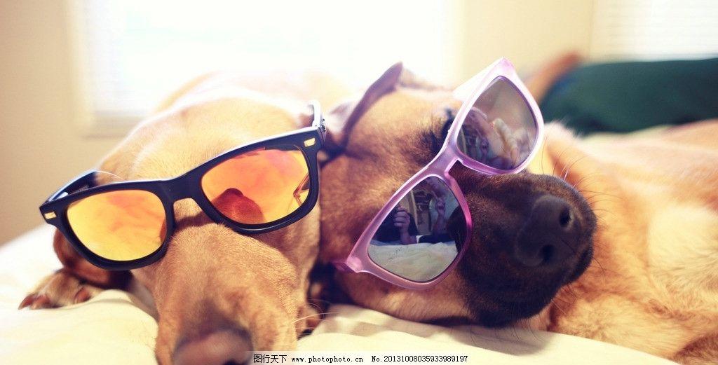 小狗 戴墨镜的狗狗 动物世界 野生动物 科学探秘 唯美 摄影 高清摄影