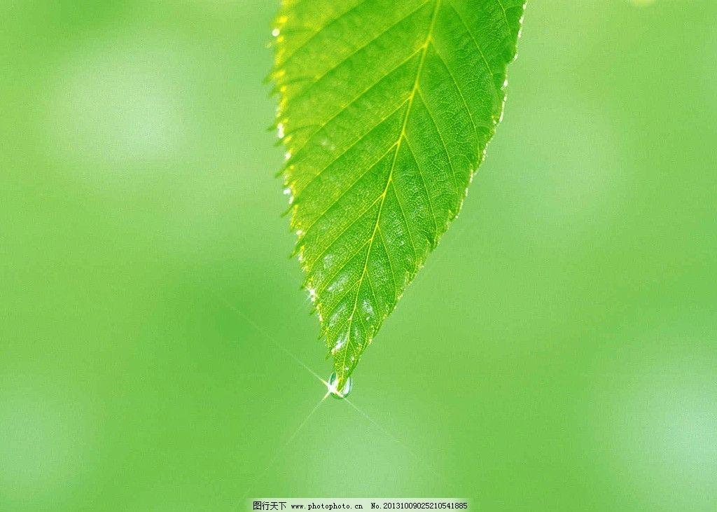 树叶 绿色背景 水珠 叶子