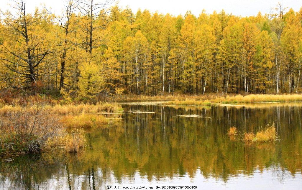 阿尔山的秋天 阿尔山 秋天 秋景 草原 白桦林 金秋 国内旅游 旅游摄影