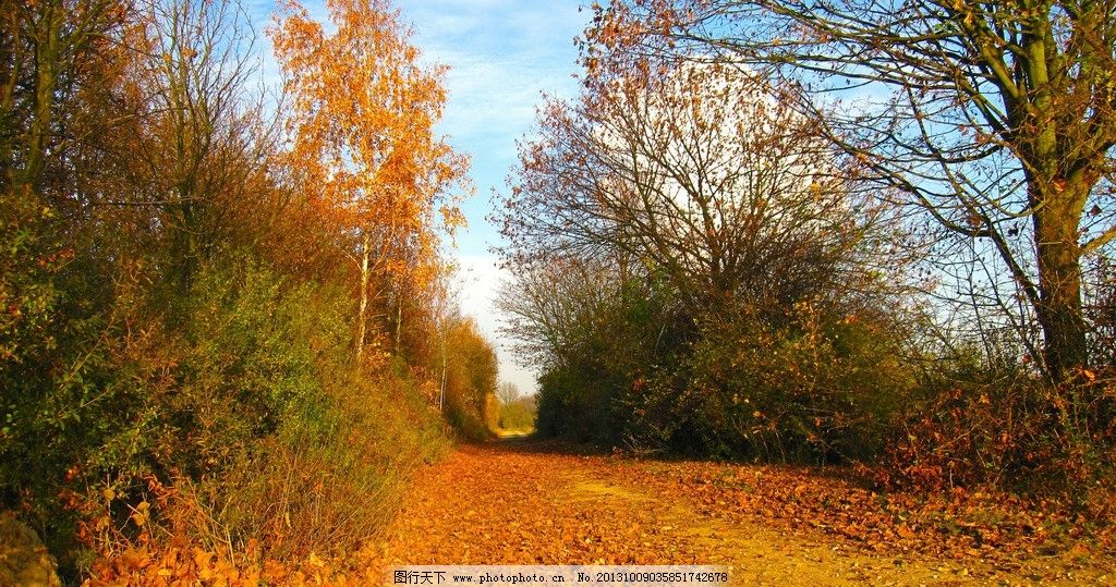 林荫小道 丛林 森林 树林 叶子 树叶 小路 秋天 落叶 树枝 树木 树干