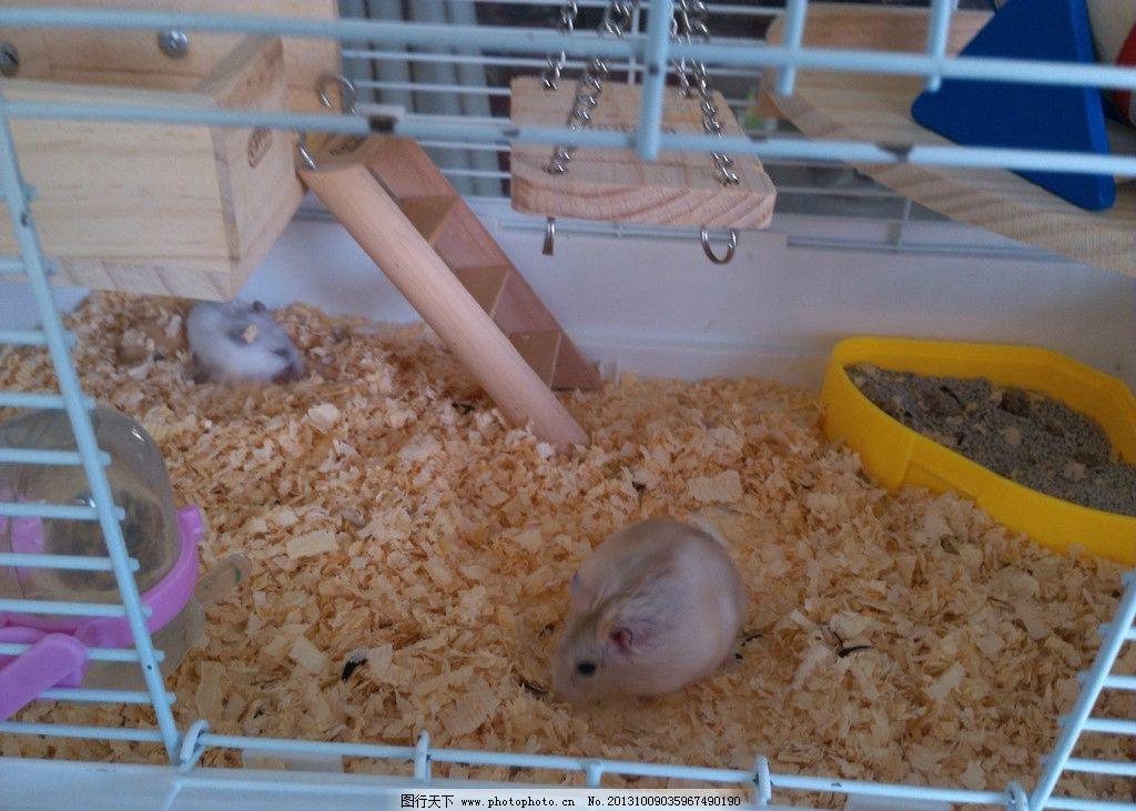 用纸箱子做仓鼠房子