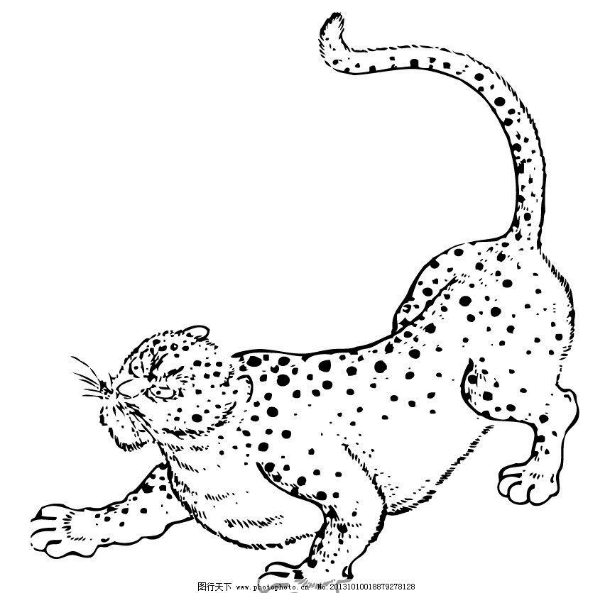豹子 金钱豹 吉祥动物 吉祥图像 矢量