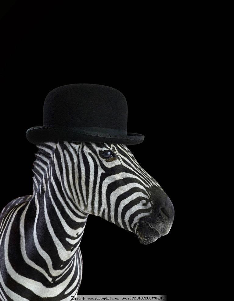 斑马 帽子 斑马头像 动物 广告物料 黑白 psd分层素材 源文件 300dpi