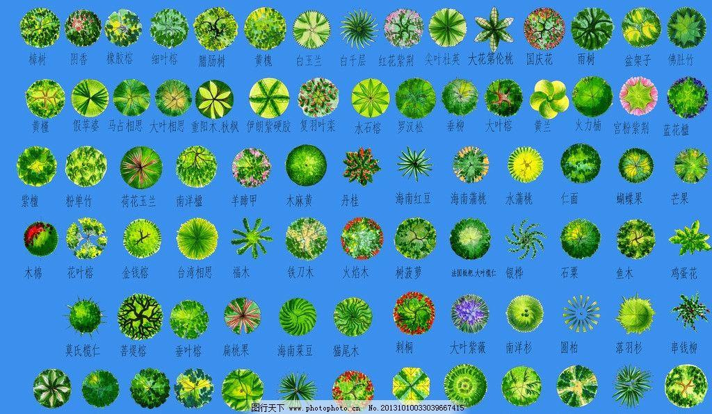 植物总平面素材 彩色总平面图素材 素材 园林素材 绿植 平面素材 psd