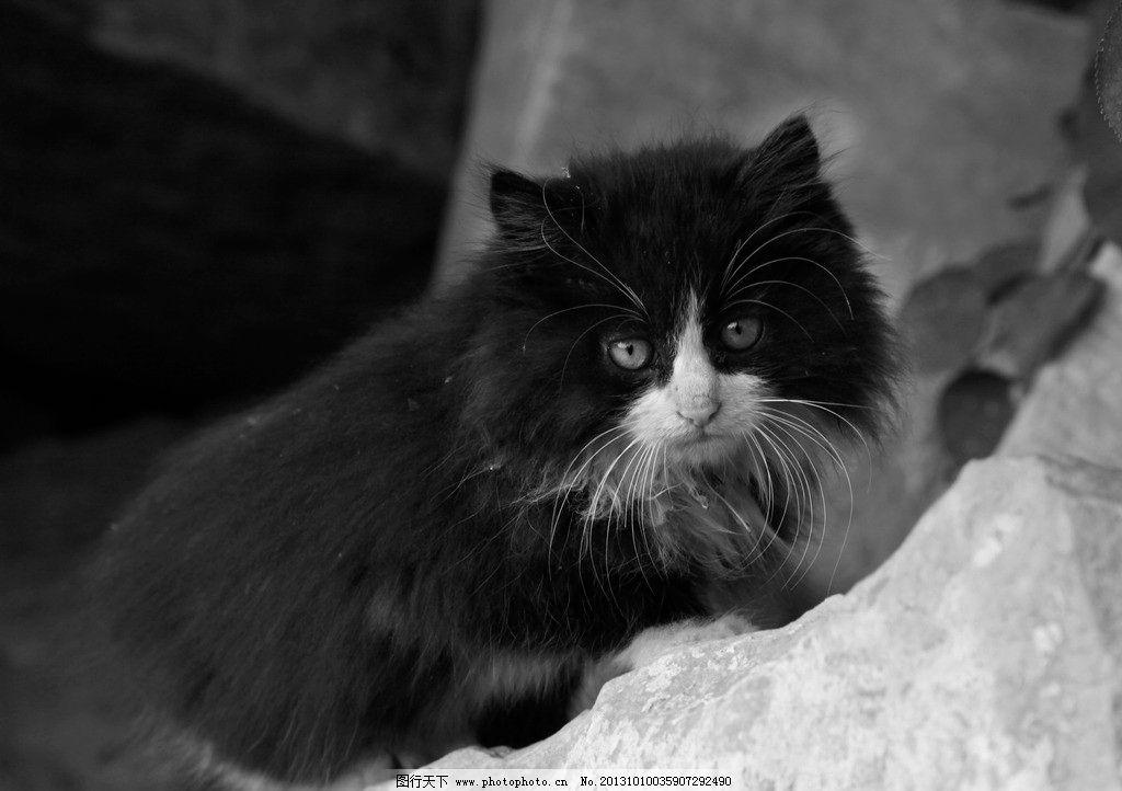可爱猫 动物 猫咪 黑白动物照 流浪猫 宠物 摄影