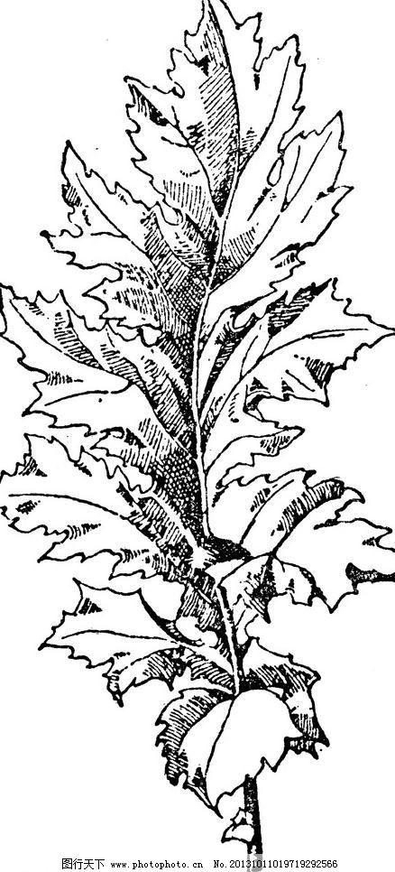 欧式 设计 树叶 复古钢笔画