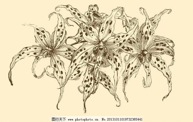 图案 插画 插图 版画 简笔画 风光 装饰画 黑板报 植物 钢笔画 其他