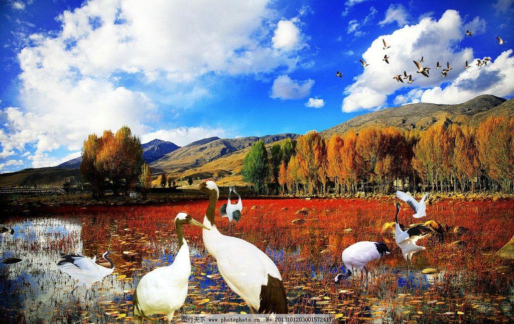 白鹤 秋天美丽风景 飞鸟 池塘 草地 树木 山峰 蓝天 白云 海报设计