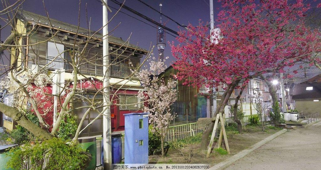日本樱花街道