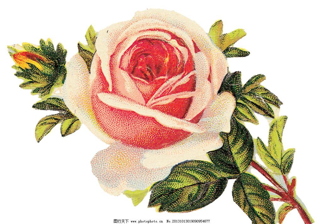 复古玫瑰花模板下载 玫瑰花模板下载 手绘玫瑰花 手绘花朵 复古花朵