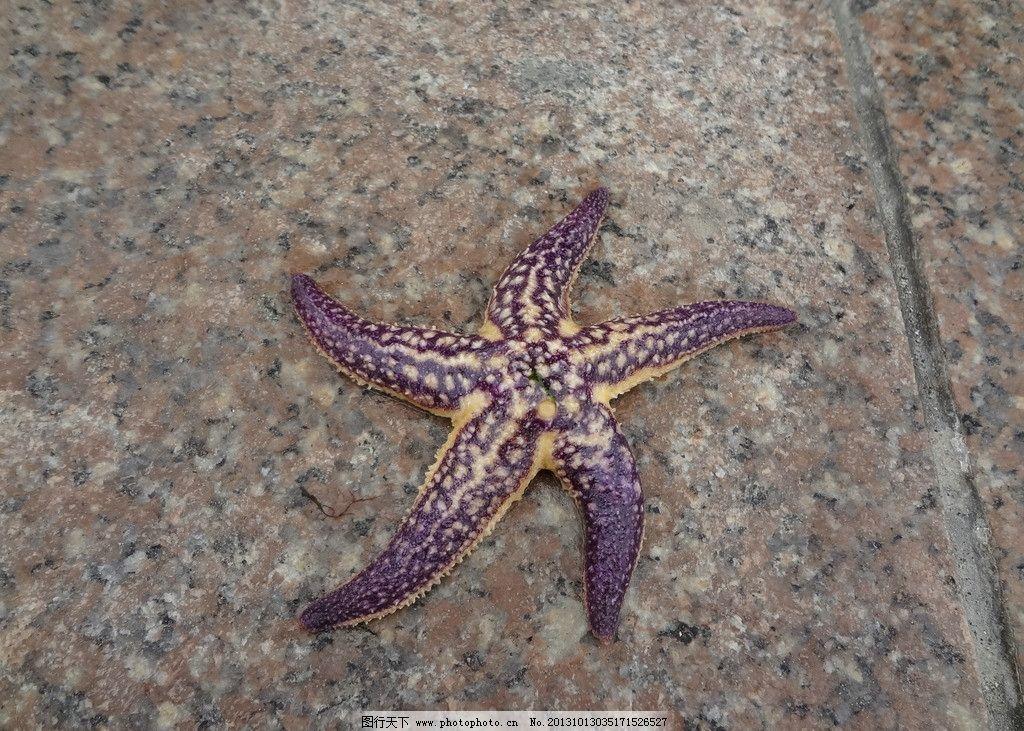 海星图片_海洋生物_生物世界_图行天下图库
