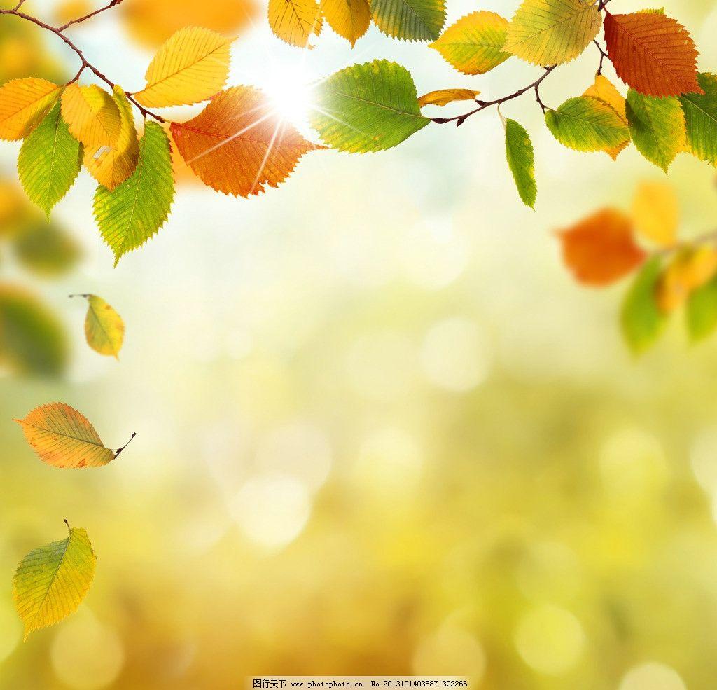 树叶 彩色树叶 矢量树叶 秋叶 阳光 光线 落叶 枫叶 绿色树叶 红色