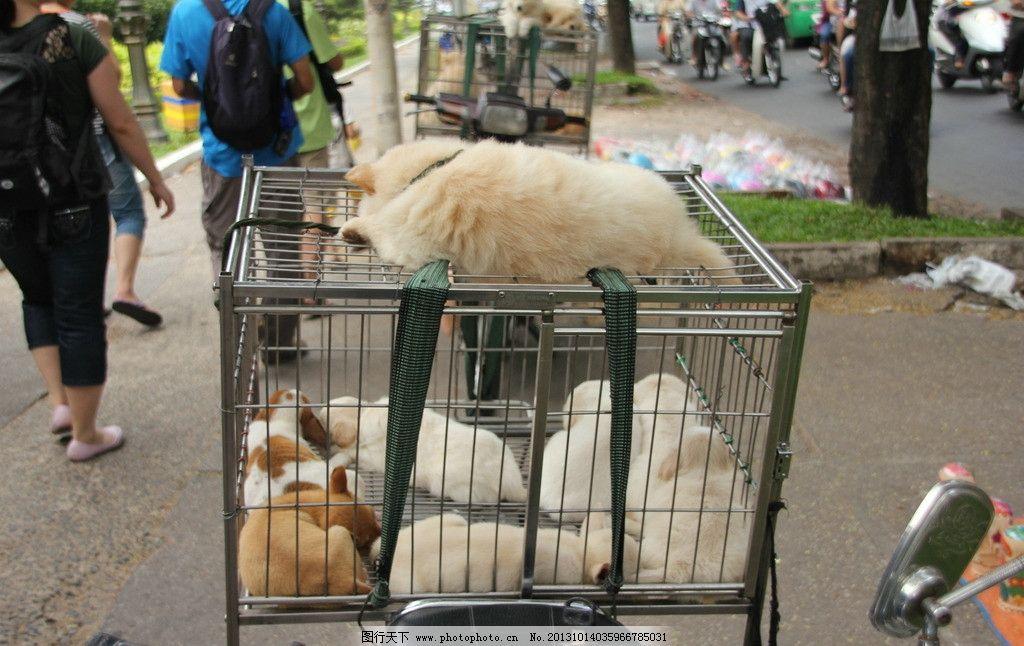 小狗 狗 颜色 花狗 笼子 动物 家禽家畜 生物世界 摄影 72dpi jpg