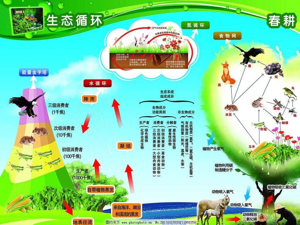 生态循环 生态循环示意图 动物 植物 氮循环 水循环 食物链 展板类
