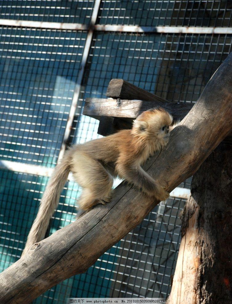 北京动物园的猴子图片