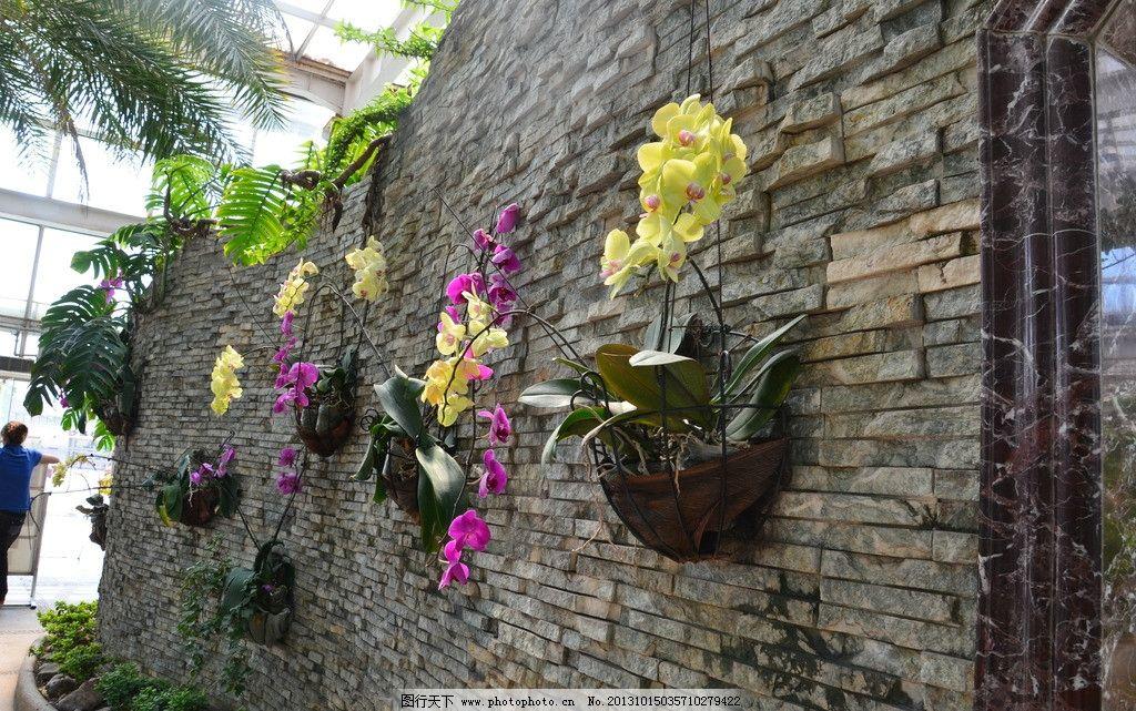 蝴蝶兰 树木 石家庄 植物园 温室大棚 绿色 黄色 花朵 粉色 绿叶 植物