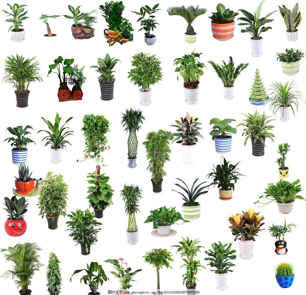 绿植素材 绿植 盆栽 大型盆栽 小型盆栽 植物素材 psd分层素材 源文件