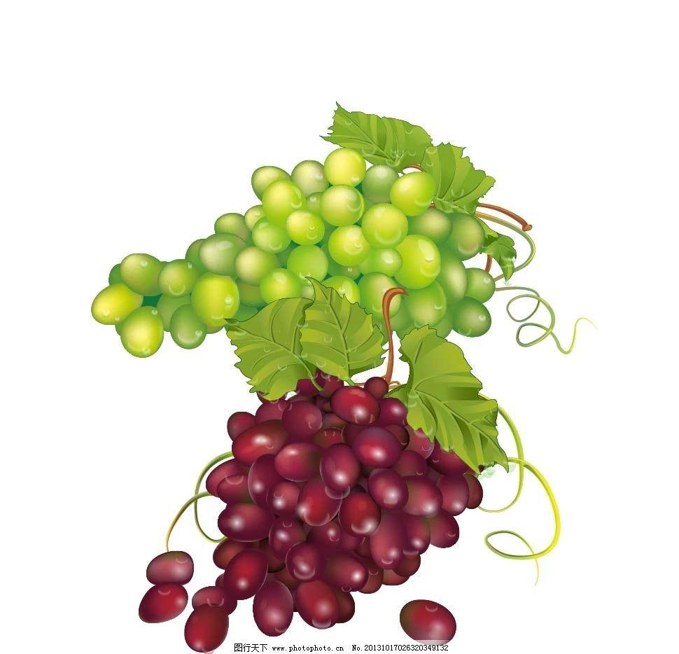 手绘葡萄 匍萄矢量图 葡萄藤 果园 葡萄汁 葡萄树 红葡萄 绿葡萄 紫