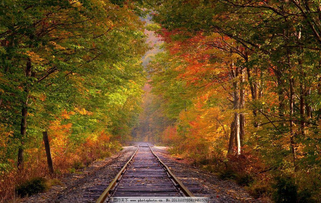 铁路 森林 树林 美景 秋景 秋色 金色 风光 景观 秋天 秋季