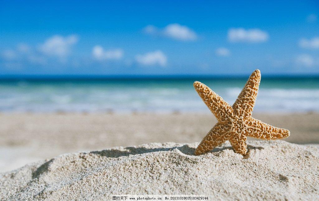 海星 海滩 海边 海洋 大海 沙滩 蓝天 白云 海洋生物 生物世界 摄影