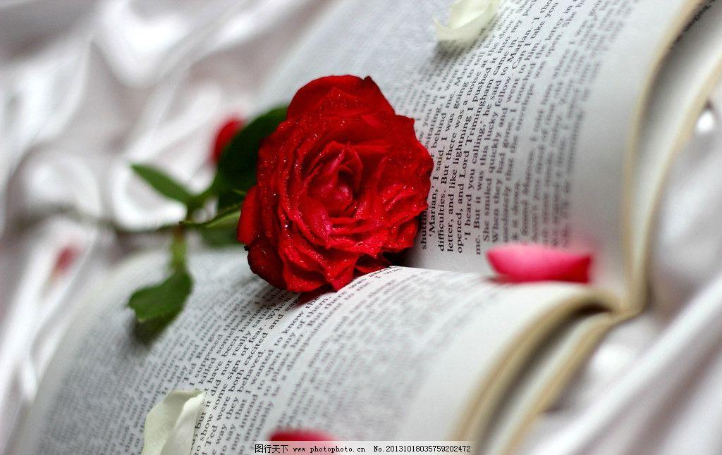 玫瑰 鲜花 花朵 书本 书籍 花瓣 红色 鲜艳 非主流 花蕾 花蕊图片