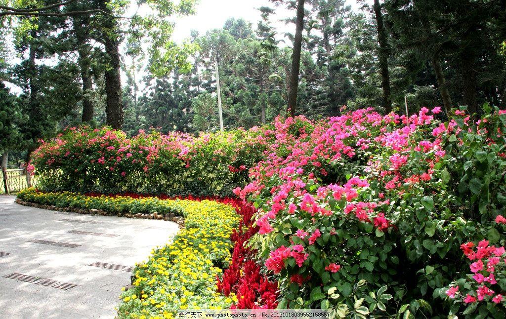 三角梅 景观植物 层层叠叠 观赏 生态 厦门植物园采风 园林建筑 建筑