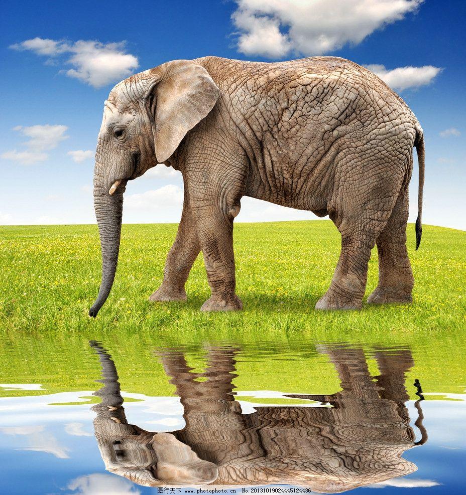 猜图几种动物_大象图片里有几个动物-一个大象图让猜有多少动物