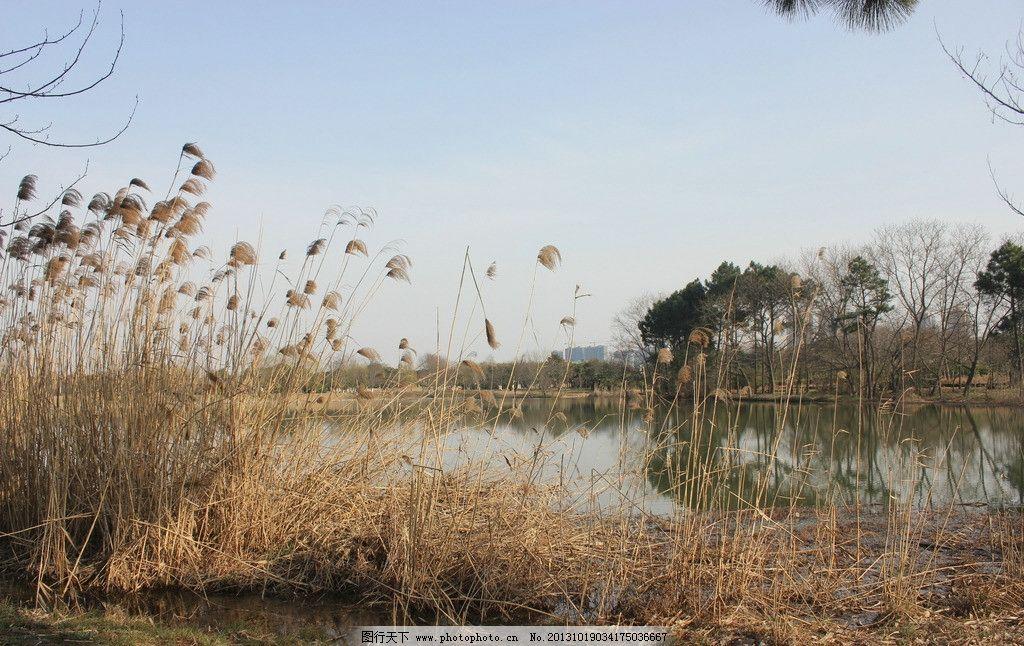 秋景 萧瑟 芦苇 溪水 植物园 自然风景 旅游摄影 摄影 72dpi jpg