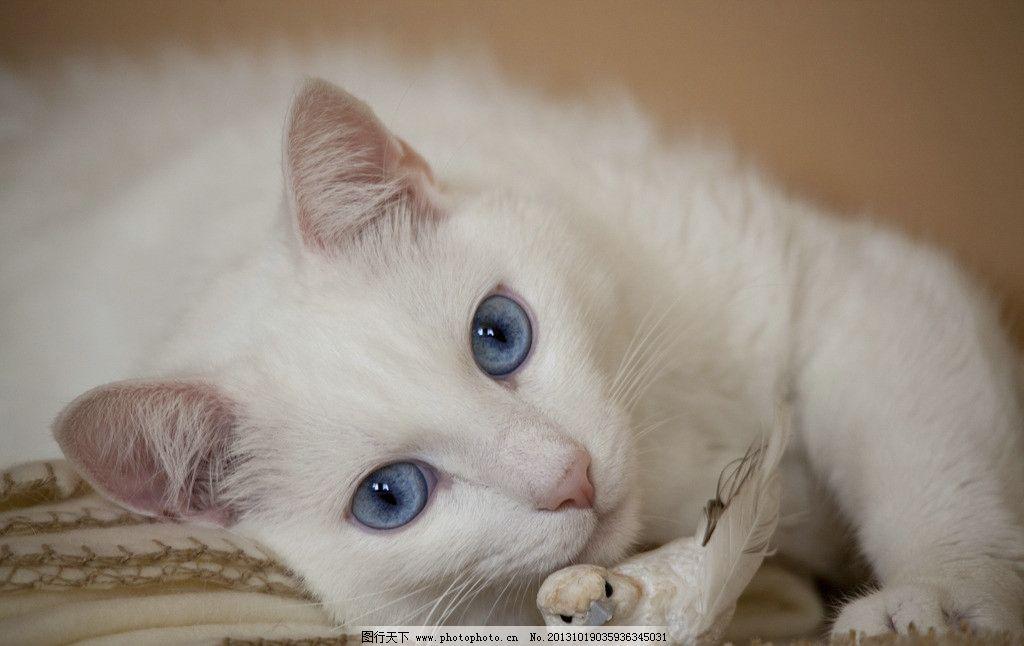 白猫图片大全头像