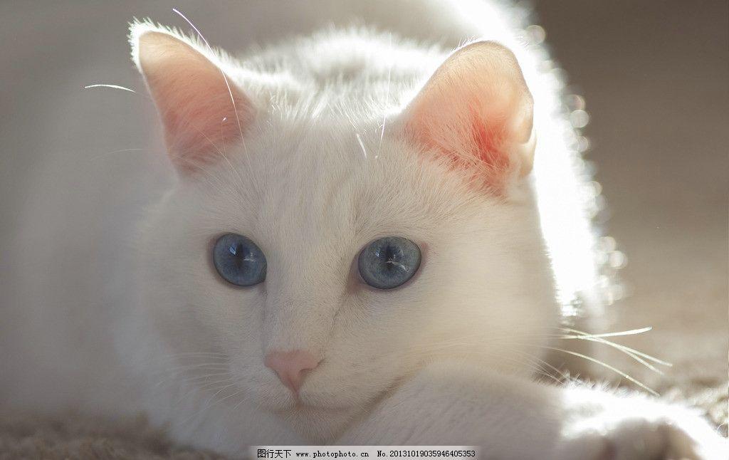 耳朵竖起来的动物图片