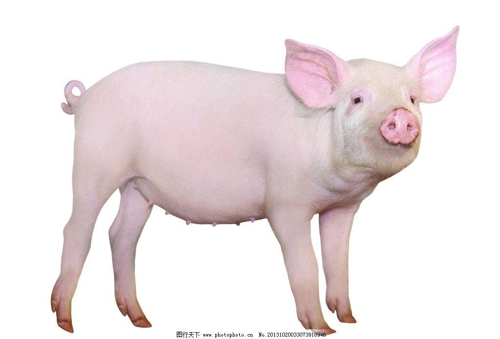 猪二方连续剪纸步骤图
