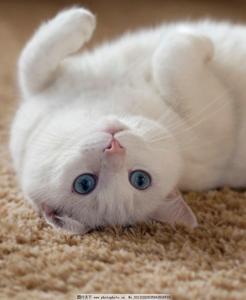 白猫 小白猫 小猫 猫咪