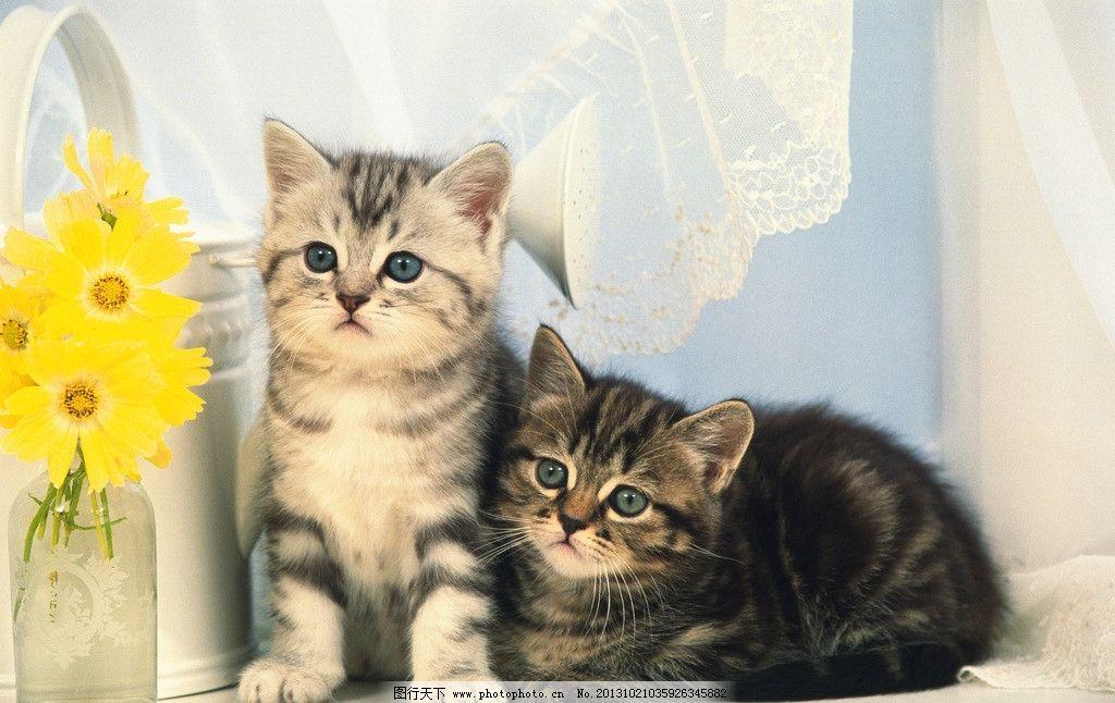 壁纸 动物 猫 猫咪 小猫 桌面 1024_646
