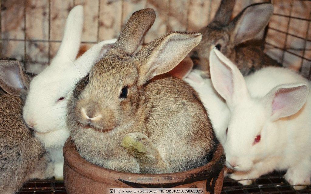 jpg 300dpi 兔子图片素材 一群兔子 可爱的兔子 萌兔子 各种小动物