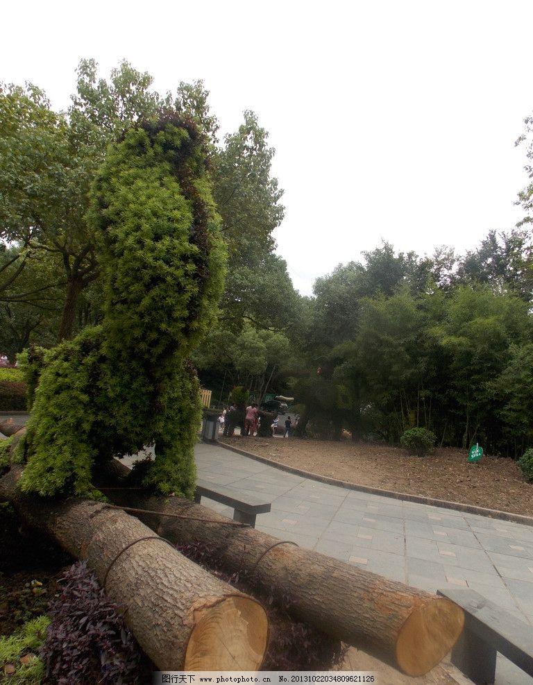 树木 植物 景观 园艺 动物园 景山公园 自然风景 自然景观 摄影 300