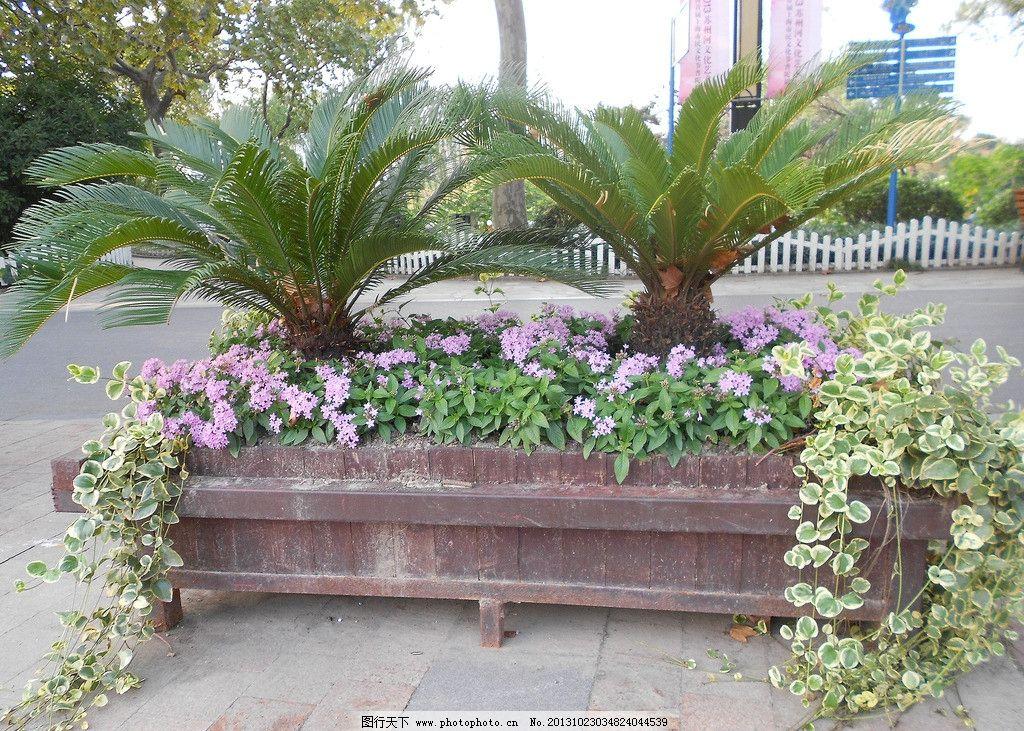 户外盆栽 户外绿植 户外风景 花草 大盆栽 公园风景 摄影图片