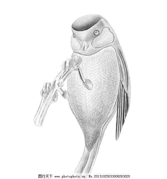 珠宝 胸针 珠宝胸针 小鸟 珠宝手绘 ps手绘 珠宝手稿 其他 psd分层